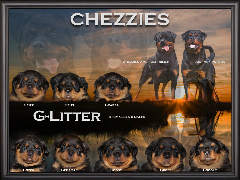 Chezzies G litter puppys1