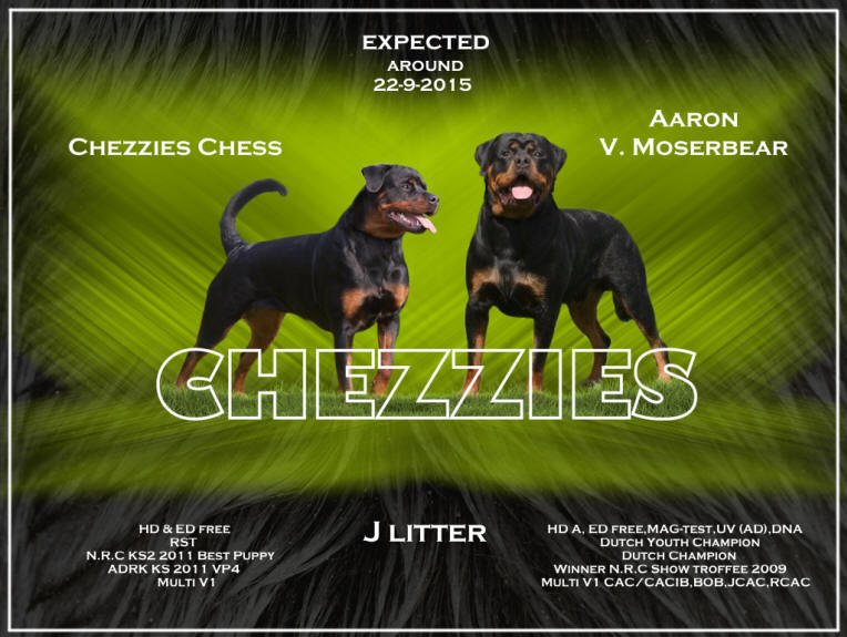 Chezzies J litter 22-91